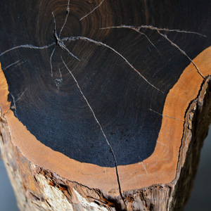 African Blackwood / Grenadilla